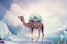 Fantasy Camel