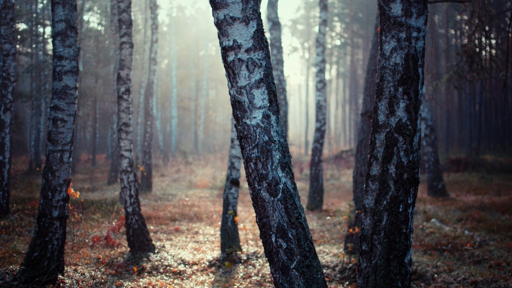 Обои Trees in the Forest Sun Rise